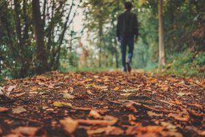 autumn-1869160_640