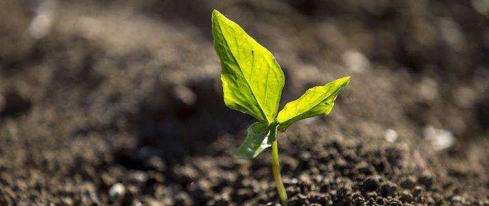 Ziemia – lekarstwo w zasięgu naszych stóp