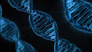 Epigenetyczna wizja życia czyli o tym, co determinuje naszą biologię – geny, środowisko, a może umysł…
