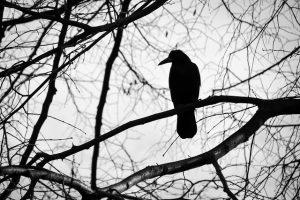 bird-2071185_640