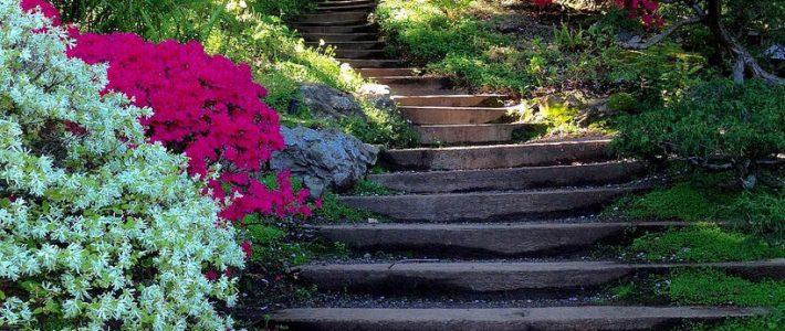 Hortiterapia, czyli leczenie ogrodem